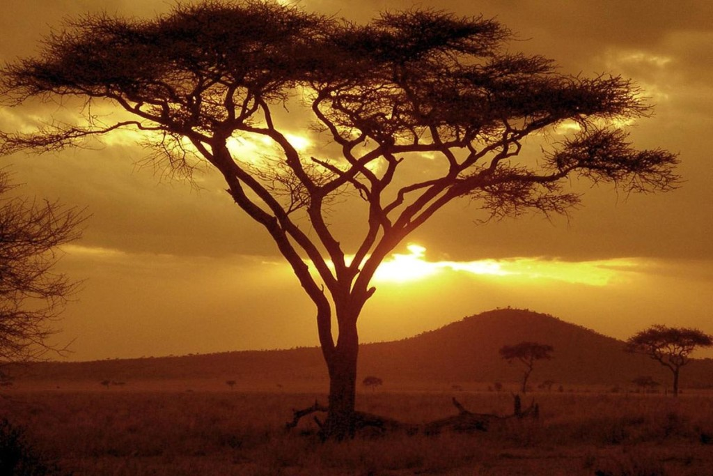 sunset-on-acacia-tree-sunset-1725750302