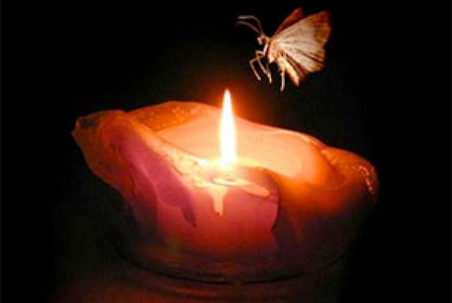 moth-to-solar-flame
